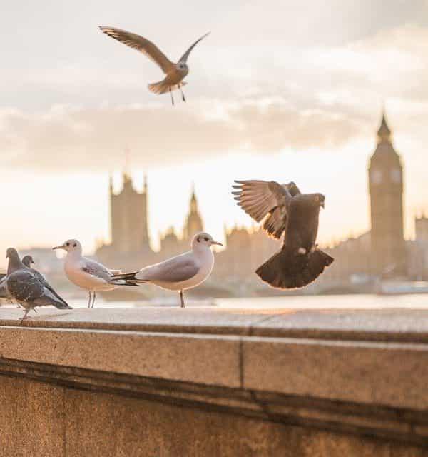 Евтини полети варна лондон